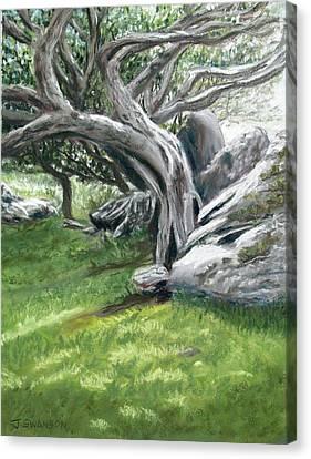 Irish Tree Ring Of Kerry Canvas Print by Joan Swanson