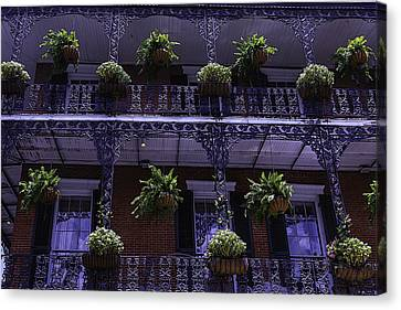 Iron Railings And Plants Canvas Print by Garry Gay