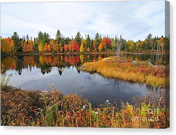 Island Brook  Canvas Print by Catherine Reusch  Daley