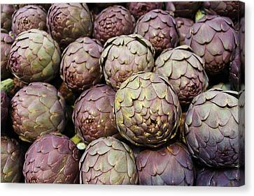 Italian Artichokes Canvas Print by Colleen Kammerer