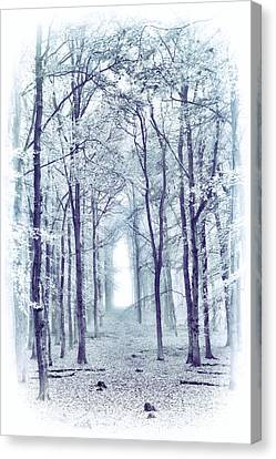 Its In The Trees Canvas Print by Tim Gainey