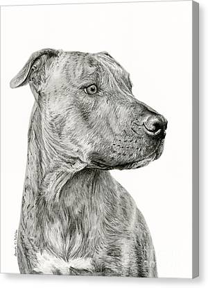 Ittie Bittie Pittie Canvas Print by Sarah Batalka