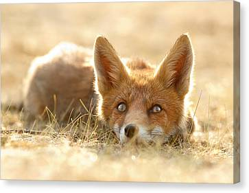 Little Fox Dreaming Of A Foxy Future Canvas Print by Roeselien Raimond