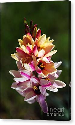 Ixia's Own Natural Bouquet Canvas Print by Joy Watson