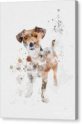 Jack Russell Terrier Canvas Print by Rebecca Jenkins