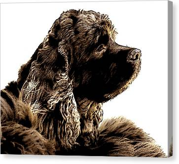 Jack Waits Canvas Print by Norman  Andrus