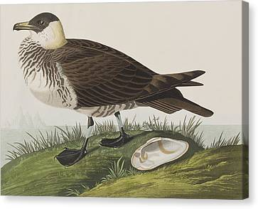 Jager Canvas Print by John James Audubon