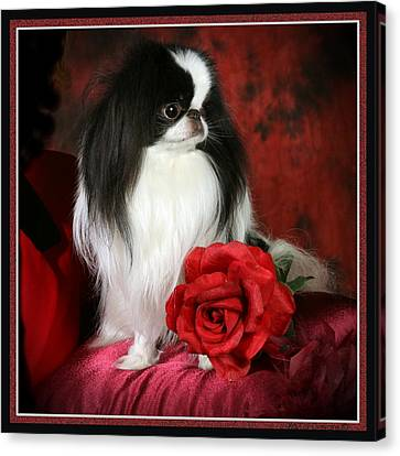 Japanese Chin And Rose Canvas Print by Kathleen Sepulveda