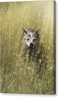 Jazzy In The Grasses Canvas Print by Karen  W Meyer