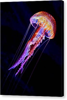 Jellyen Canvas Print by Henry Jager