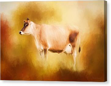 Jersey Cow In Field Canvas Print by Michelle Wrighton