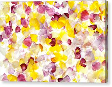 Jewel Like Petals Canvas Print by Brad Rickerby