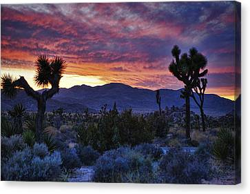 Joshua Tree Sunset Canvas Print by Wendy White