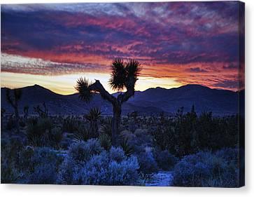 Joshua Tree Sunset_2 Canvas Print by Wendy White