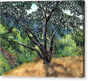 Juan Bautista De Anza Trail Oak Canvas Print by Laura Iverson