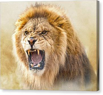 Judah Canvas Print by Ron  McGinnis