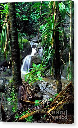Jungle Waterfall Canvas Print by Thomas R Fletcher