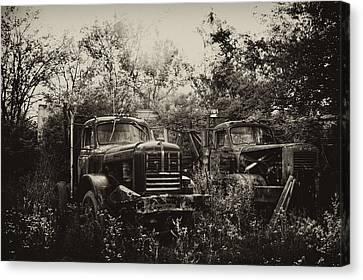 Junkyard Dogs IIi Canvas Print by Off The Beaten Path Photography - Andrew Alexander
