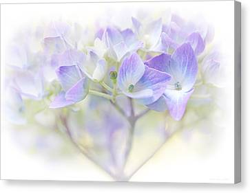Just A Whisper Hydrangea Flower Canvas Print by Jennie Marie Schell
