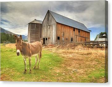 Just Another Day On The Farm Canvas Print by Donna Kennedy