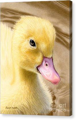 Just Ducky Canvas Print by Sarah Batalka