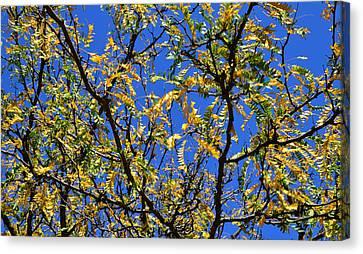 Kaleidoscope Canvas Print by Corinne Rhode