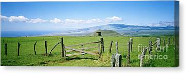 Kamuela Pasture Canvas Print by David Cornwell/First Light Pictures, Inc - Printscapes