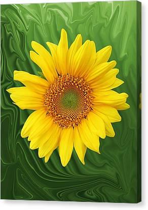 Kansas Sunflower Canvas Print by Jim  Darnall