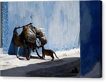 Kasbah Cat Canvas Print by Peter Verdnik