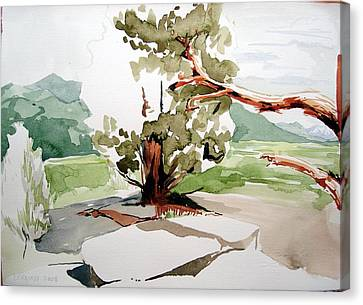 Kennedy Meadows Tree Canvas Print by Amy Bernays