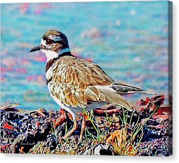 Killdeer  Canvas Print by Ken Everett