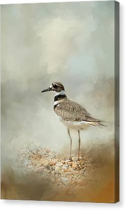 Killdeer On The Rocks Canvas Print by Jai Johnson