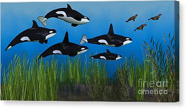 Killer Whale Pod Canvas Print by Corey Ford