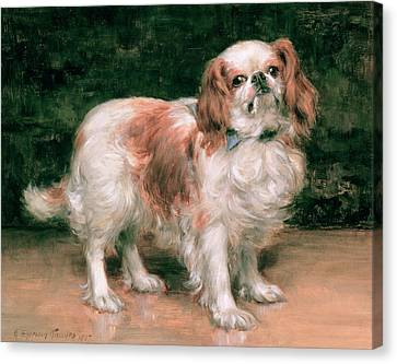 King Charles Spaniel Canvas Print by George Sheridan Knowles