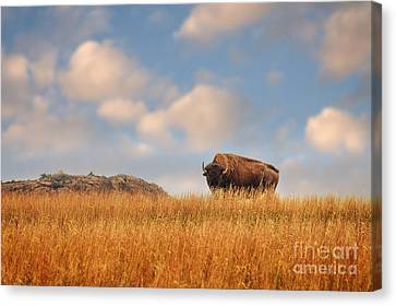 King Of The Hill Canvas Print by Tamyra Ayles