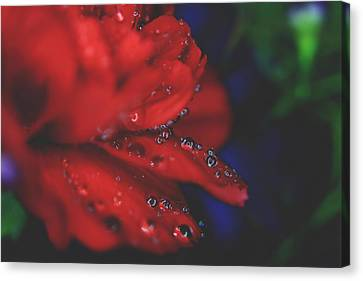 Kisses In The Rain Canvas Print by Laurie Search