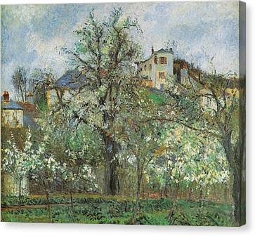 Kitchen Garden And Flowering Trees Canvas Print by Camille Pissarr