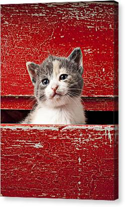 Kitten In Red Drawer Canvas Print by Garry Gay