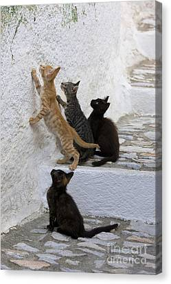 Kittens Chasing Woodlouse Canvas Print by Jean-Louis Klein & Marie-Luce Hubert