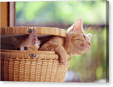 Kittens In Basket Canvas Print by Sarahwolfephotography
