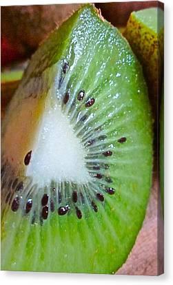Kiwi Seed Display Canvas Print by Gwyn Newcombe