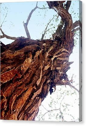 knarly Tree Canvas Print by Marty Koch