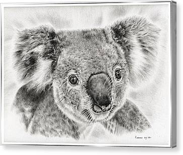 Koala Newport Bridge Gloria Canvas Print by Remrov