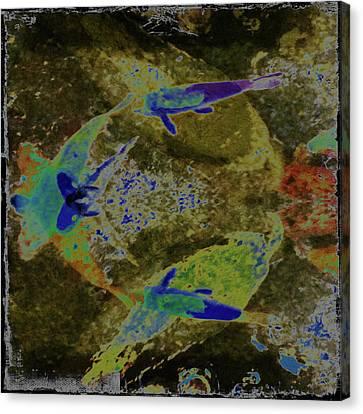 Koi 3 Canvas Print by Ann Tracy