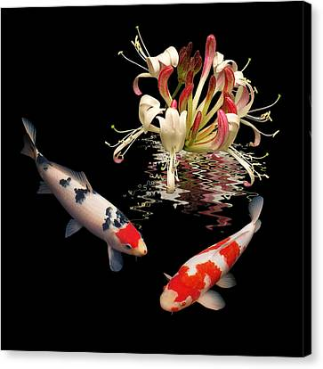 Koi With Honeysuckle Reflections Square Canvas Print by Gill Billington