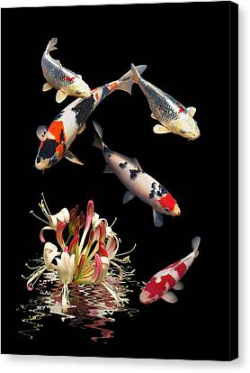 Koi With Honeysuckle Reflections Vertical Canvas Print by Gill Billington