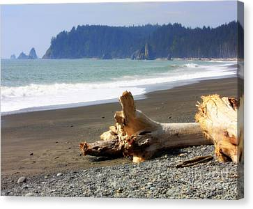 La Push Beach  Canvas Print by Carol Groenen