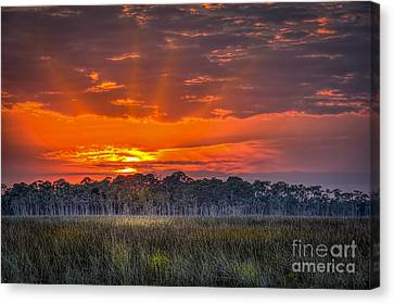 Labor Of Love Canvas Print by Marvin Spates