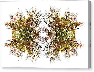 Lace Canvas Print by Debra and Dave Vanderlaan