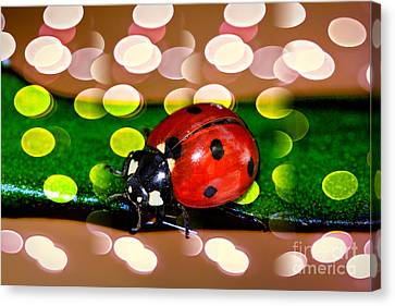 Ladybug In Red Canvas Print by Kasia Bitner